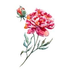 Watercolor peony vector image vector image