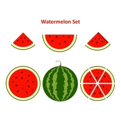 Watermelon and slices vector image vector image