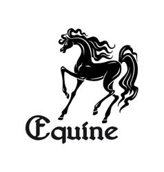 Arabian mare black silhouette for dressage design vector