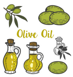 olive oil design element for logo label emblem vector image