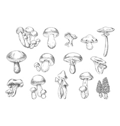 Edible and poisonous wild mushrooms sketch style vector