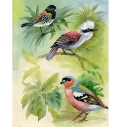 Exotic Birds on Tree Branches Watercolor vector image