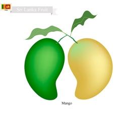 Fresh Mango A Famous Fruit in Sri Lanka vector image