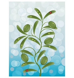 background with a olive branch vector image