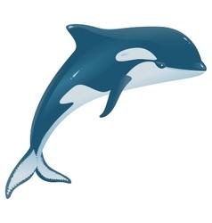 Orcinus orca marine mammal vector
