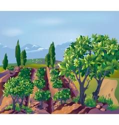 Plantation vector