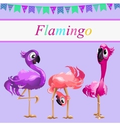 Three funny Flamingo on a pink background vector image