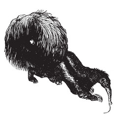 Crested anteater vintage vector