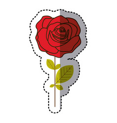 red rose with oval petals and leaves icon vector image
