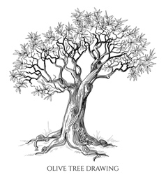 Olive tree isolated hand drawn vector image