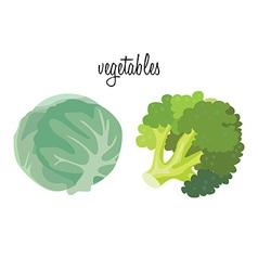 cabage brokkoli vector image vector image