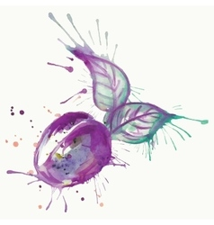 Abstract watercolor painting plum fruit vector