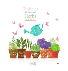 Design template with set of different herbs vector