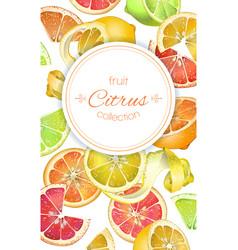 Citrus vertcal banner vector
