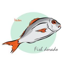 Fish dorado vector
