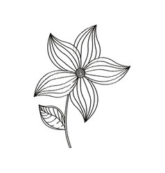 flower ornament decoration sketch vector image vector image