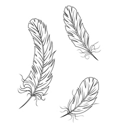 Isolated feathers and quills vector image vector image