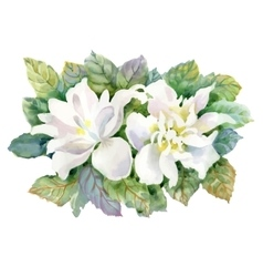 Watercolor summer garden blooming flower on white vector