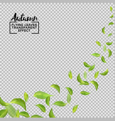 green leaves flying with the wind objects vector image