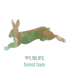 Wildlife banner - forest animals - hare vector image
