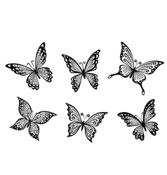 Beautiful butterflies insects vector image