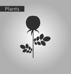 Black and white style icon of plant rosa vector