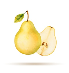 Pear hand drawn watercolor vector