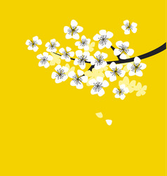 white sakura blossom branch on sunny yellow vector image vector image
