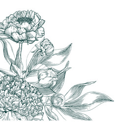 Ink hand drawn of ornate peonies vector