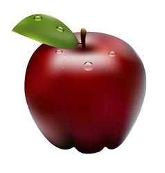 apple1 vector image vector image