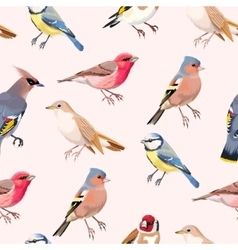 Colorful songbirds seamless vector