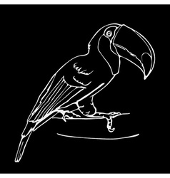 Hand-drawn pencil graphics toucan bird engraving vector