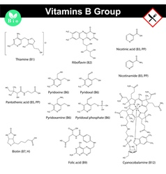 Vitamins of b group molecular structures vector