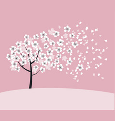 white sakura tree blossom on pink rosy background vector image