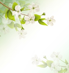 Cherry branch with white flowers on green vector