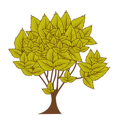 Green leafy tree with several leaves vector