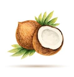 Coconut hand drawn watercolor vector
