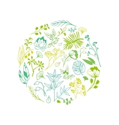 Plants and herbs background vector