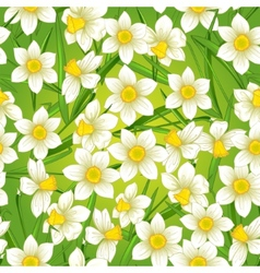 Floral seamless background with white narcissus vector image