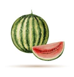 Watermelon hand drawn watercolor vector