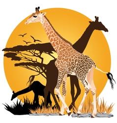 African Giraffes Sunset vector image