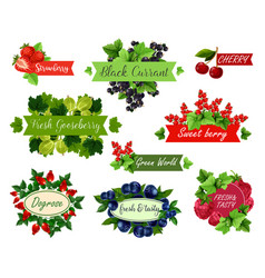 berry and fruit label set for food drink design vector image