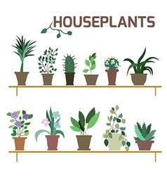 Set of indoor plants in pots vector