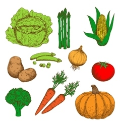 Colorful sketch of autumn fresh vegetables vector