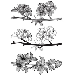 Set of cherry blossoms vector