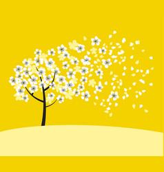 white sakura tree blossom on sunny yellow vector image vector image