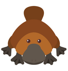Platypus on white background vector