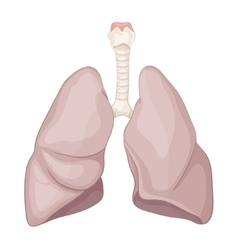 Human healthy lung vector