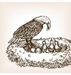 Eagle feeding baby bird sketch vector