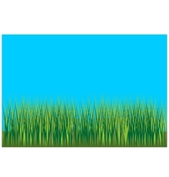 Grass background 001 vector
